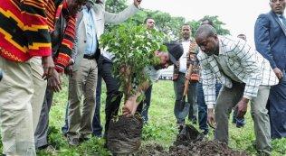 4649607_2014_alberi_etiopia_immagine_pubblicata_dal_primo_ministro_sulla_pagina_social